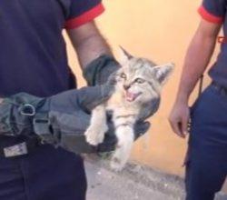 Araçlara girmekten vazgeçmeyen yavru kedi sahiplendirildi