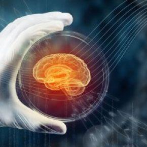 Bilim insanları beyin üretti