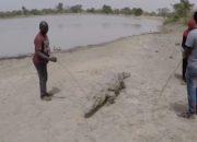 Burkina Faso'da timsahlar ve insanlar iç içe yaşıyor