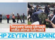 CHP'liler Meclis bahçesine zeytin fidanı dikti
