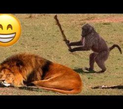 Çıldırmalık Hayvan Dublajları Komik – Harun Memedov