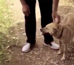 Çin'de köpek gömülen bebeği kurtardı