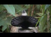 çok ilginç kuş