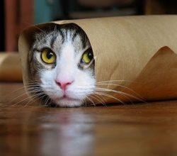En komik kediler, kedi videoları izle