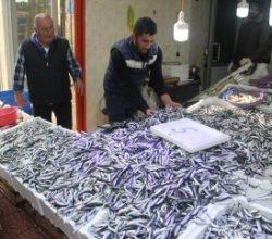 Hamsi avı balıkçının yüzünü güldürdü