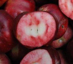 İçi de dışı da kırmızı elmayı tescillemek istiyorlar
