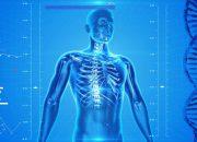 Vücudumuz Hakkında Hepimizin Yanlış Bildiği 10 Efsane Bilgi