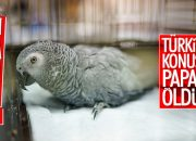 İşkence edilen papağan kurtarılamadı