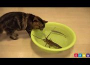 Komik hayvan çocuk videoları 🐈 Videos for kids- Cutest Animals videos