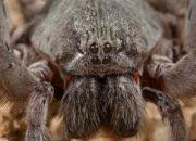 Meksika'da yeni bir örümcek türü keşfedildi