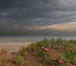 Meteoroloji uyardı: Çiçek fırtınası geliyor
