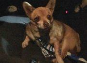 Öfke sorunu yaşayan köpek gözaltına alındı