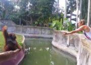 Orangutanla hayvanat bahçesinde ticaret yapan turist