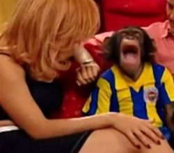 Türk dizilerinde oynayan şempanze: Çarli