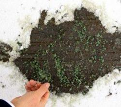 Türk kimyager üretti: Buz Yak