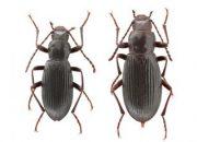 Van'da keşfedilen böceğe 'Ege Üniversitesi' adı verildi