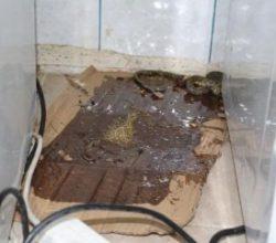 Yüksekovalı ailenin evini yılanlar bastı