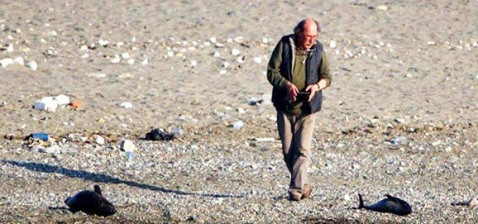 Zonguldak'ta avcılar yunusları öldürdü sebebine bakın